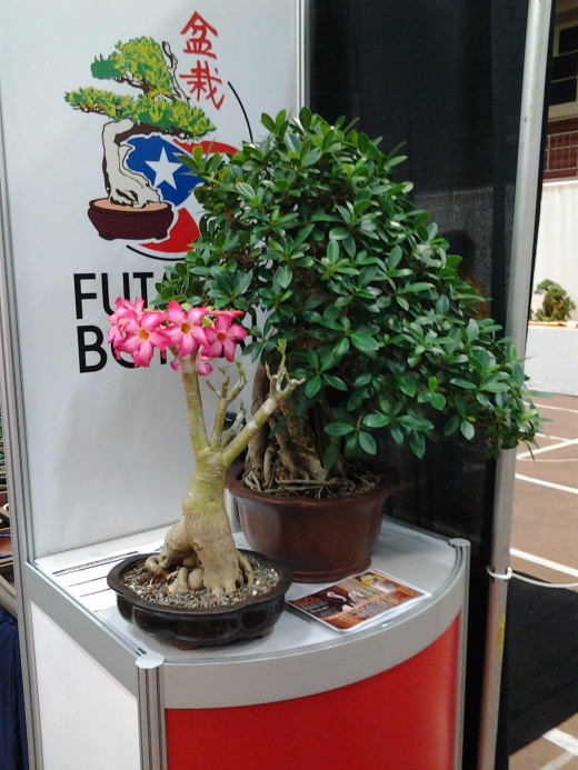Futago Bonsai award winner.