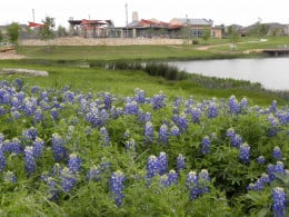 Wildflower park and swiming pool