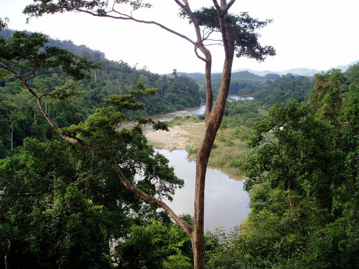 View from the canopy walk