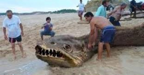 Is this a sea monster or a clever hoax?