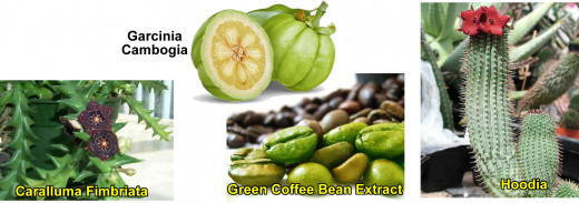 Most effective natural weight loss supplements: Garcinia Cambogia, Green Coffee Beans, caralluma Fimbriata, Hoodia