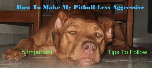How To Make My Pitbull Less Aggressive