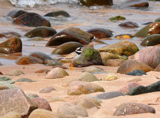 Taken at Gairloch ,Scotland