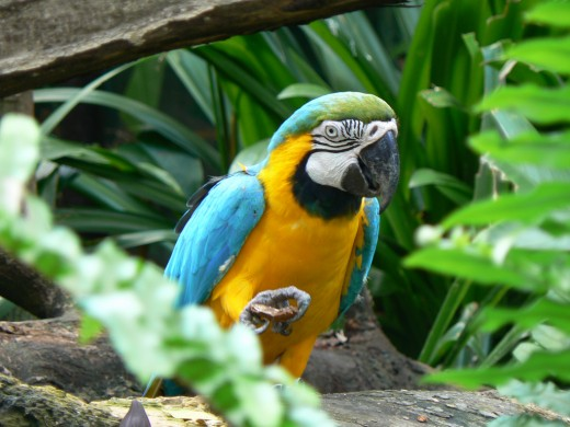 Tropical parrots can be animal spirit guides and totems too!