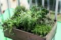 Grow a Spring Herb Garden