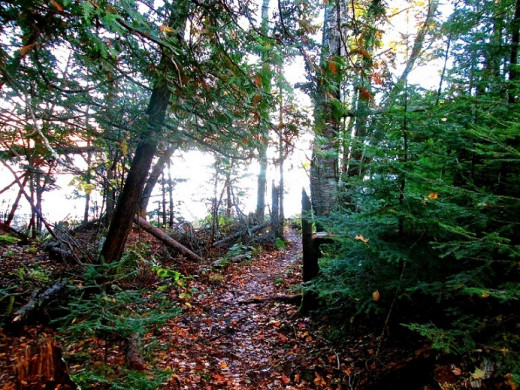 Hiking trail to the shore of Lake Superior.