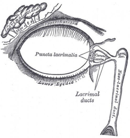 Surface structure of the eye