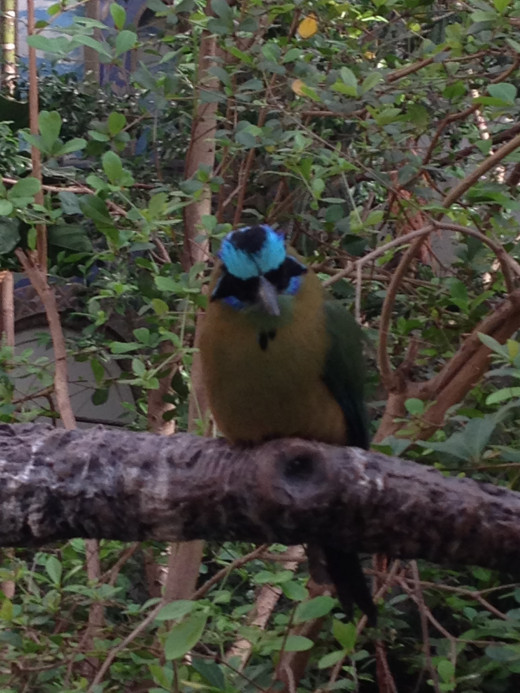 This little guy is called a Motmot.