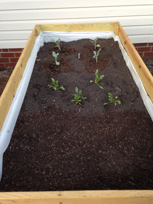 Bed 1 (back to front): Broccoli, spinach, potatoes.