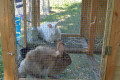 The Story of Alice the Rabbit:  A Moment with Bill Reflection