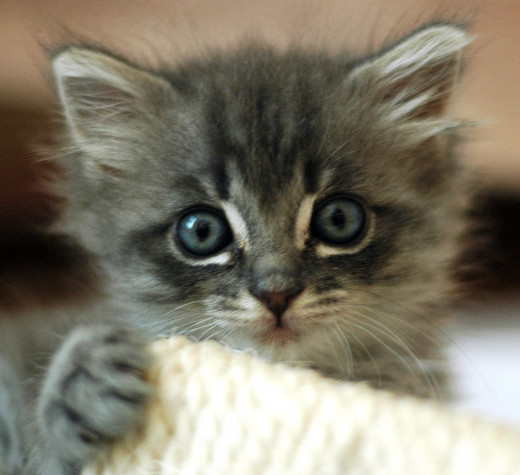 Cute kittens stimulate the same neural pathways to the nurturing centers in the brain as cute human babies.