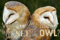 Owl Symbolism: What Does It Mean When You See an Owl?
