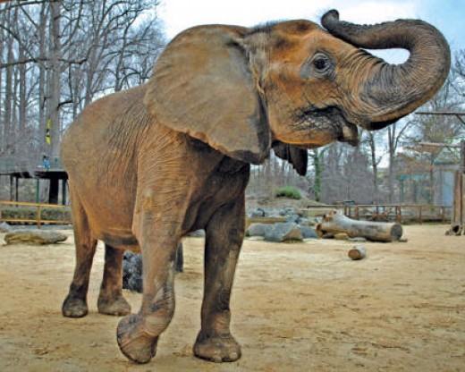 Baltimore Maryland Zoo