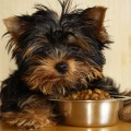Dog Food Dangers: Protect Your Pet's Health