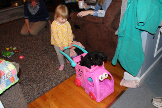 One of my granddaughters giving Gizmo the Yorkie Poo a ride.  (Don't worry she was well supervised.)