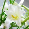 seogirl8888 profile image