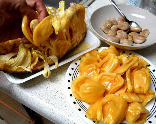 Jackfruit seed bulbs removed and ready for cooking.