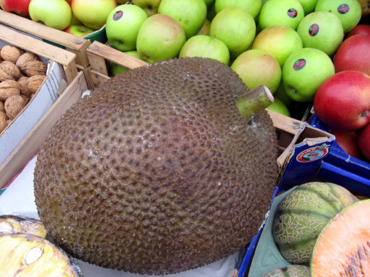 Green jackfruit resembles pulled chicken or pork when cooked.