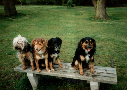 Dulcie, on the left, a Typical Norbury Mudhound, with, in order, from left to right Harry, Zoki and Malcolm (The latter three representing the highly esteemed sub group of this remarkable breed).