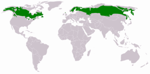 The Taiga Forest - 29% of the World Forests