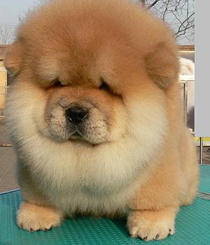 Big fluffy puppy!