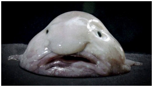 The Blob fish out of water.