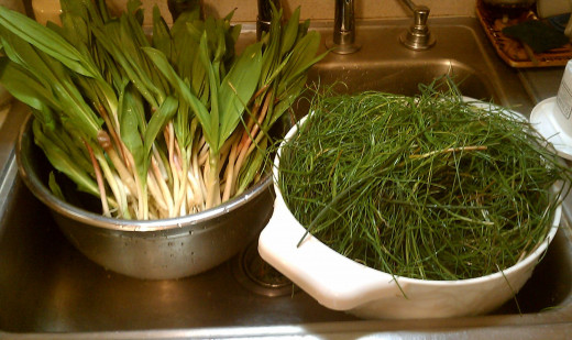 Early spring wildharvest - fresh leeks and chives, rinsed and cleaned.