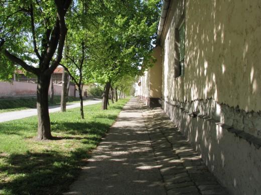 One of the many tree shaded sidewalks in Novi Becej.
