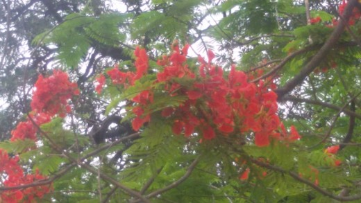 Beautiful flowers to welcome the New Year in Assam and parts of India like west Bengal, Punjab etc