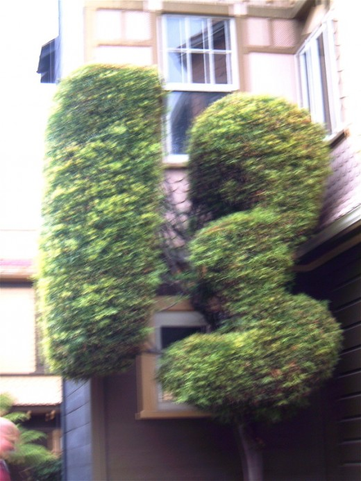 A hedge in the shape of Mrs. Winchester's favorite number.