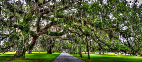 Tree Alley at Jekyll Island.