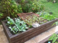 How do you improve your garden soil in Spring?