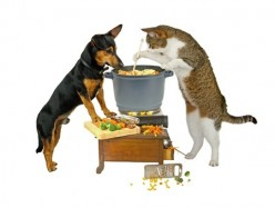 Best Cat Food: the bad, the good, the complicated?