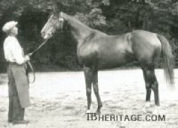 Brantome; James de Rothschild racing horse stolen by the Nazi's and sent to Germany.