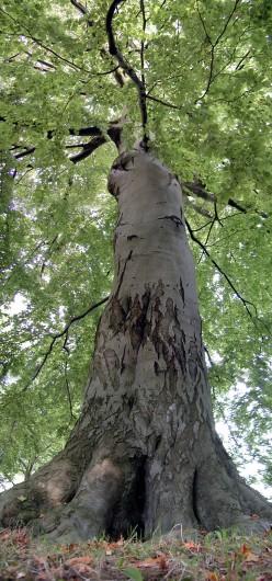 Under One Tree