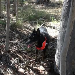 Coco loves exploring