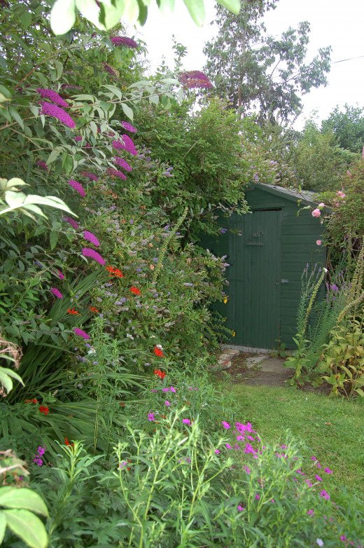 The plants blooming around my garden shed in this picture include: buddleia, roses, foxglove, hebe, crocosmia and ground geranium.
