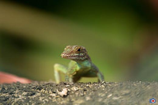 Salamander--the cute one