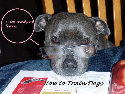 how to train a dog, dog learning theory,