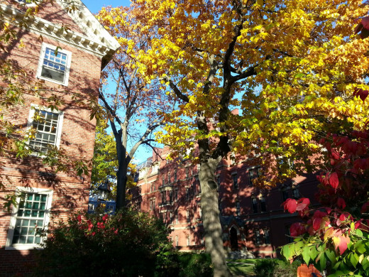The Harvard Yard presents the classic image of academic paradise.