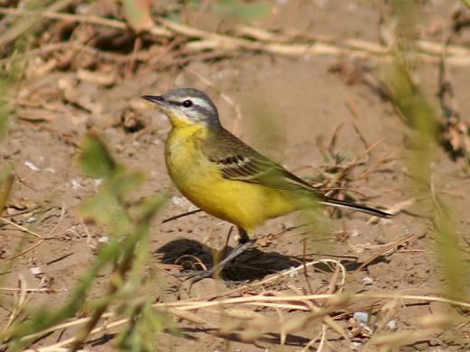 Taken in India