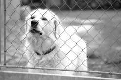 5 Reasons Dogs Bark So Much