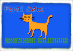 Feral Cats:  Assessing Solutions