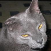 jodijoyous profile image