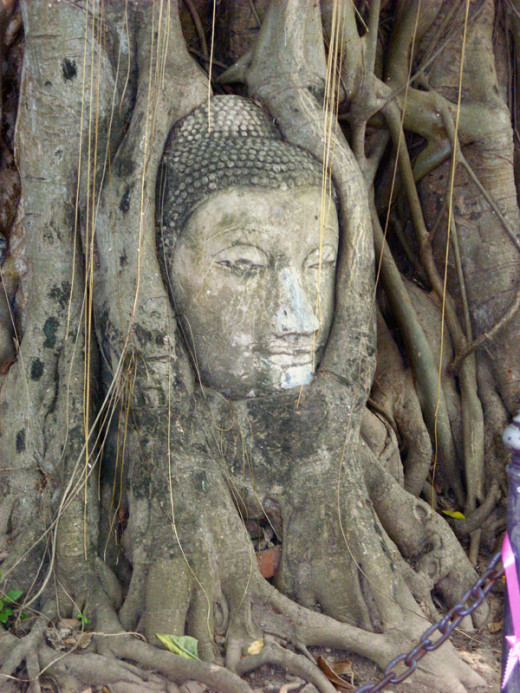 Buddha head embedded in tree roots