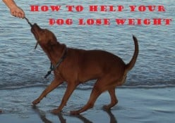 7 Ways To Help Your Dog Lose Weight