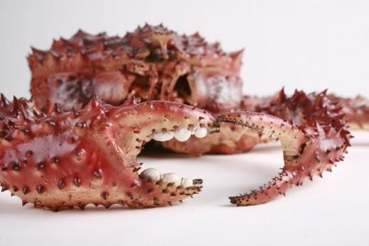 Red King Crab Anatomy Alaska Red King Crab