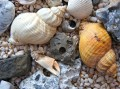 The Hobby of Collecting Sea Shells