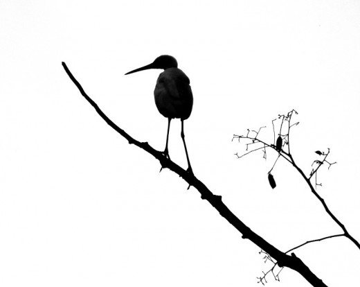 A bird-Silhouette : Memories of Hollong