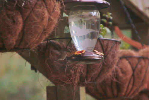 Etched Glass Feeder with Homemade Nectar
